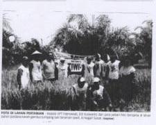 Padi Pak Tiwi-1 Cocok untuk Lahan Gambut