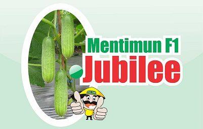 Mentimun Jubilee