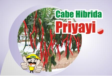 Cabe Priyayi