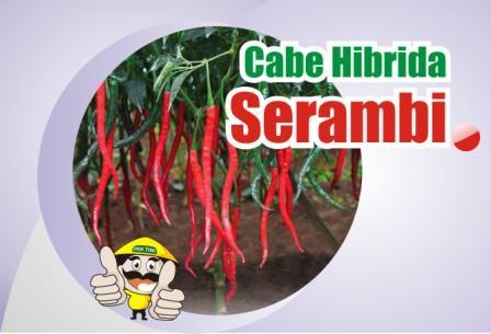 Cabe Serambi