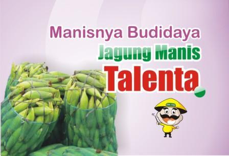 Budidaya Jagung Manis Talenta