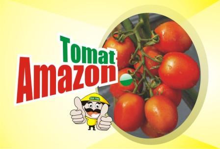 Tomat Amazon