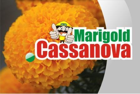 Marigold Cassanova