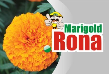 Marigold Rona