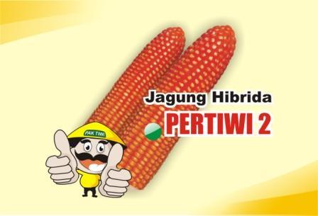 Jagung Pertiwi 2