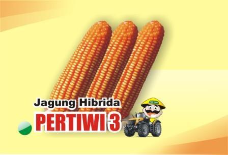 Jagung Pertiwi 3