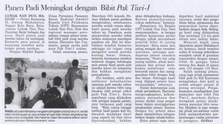Panen Padi Meningkat dengan Bibit Pak Tiwi-1