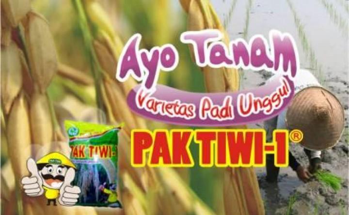 Budidaya Padi Pak Tiwi-1