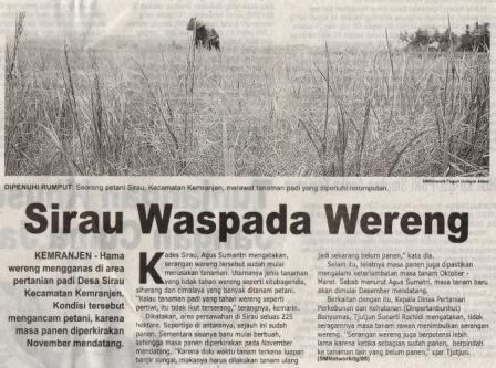Kemranjen - Hama wereng mengganas di area pertanian padi Desa Sirau Kecamatan Kemranjen. Kondisi tersebut mengancam petani, karena masa panen diperkirakan November mendatang.