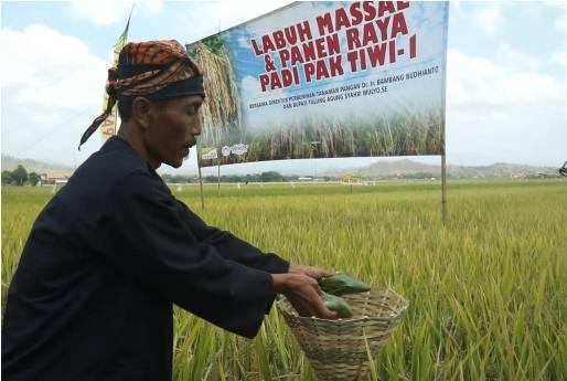 Panen Raya Pak Tiwi-1, Kec. Gondang, Tulung Agung