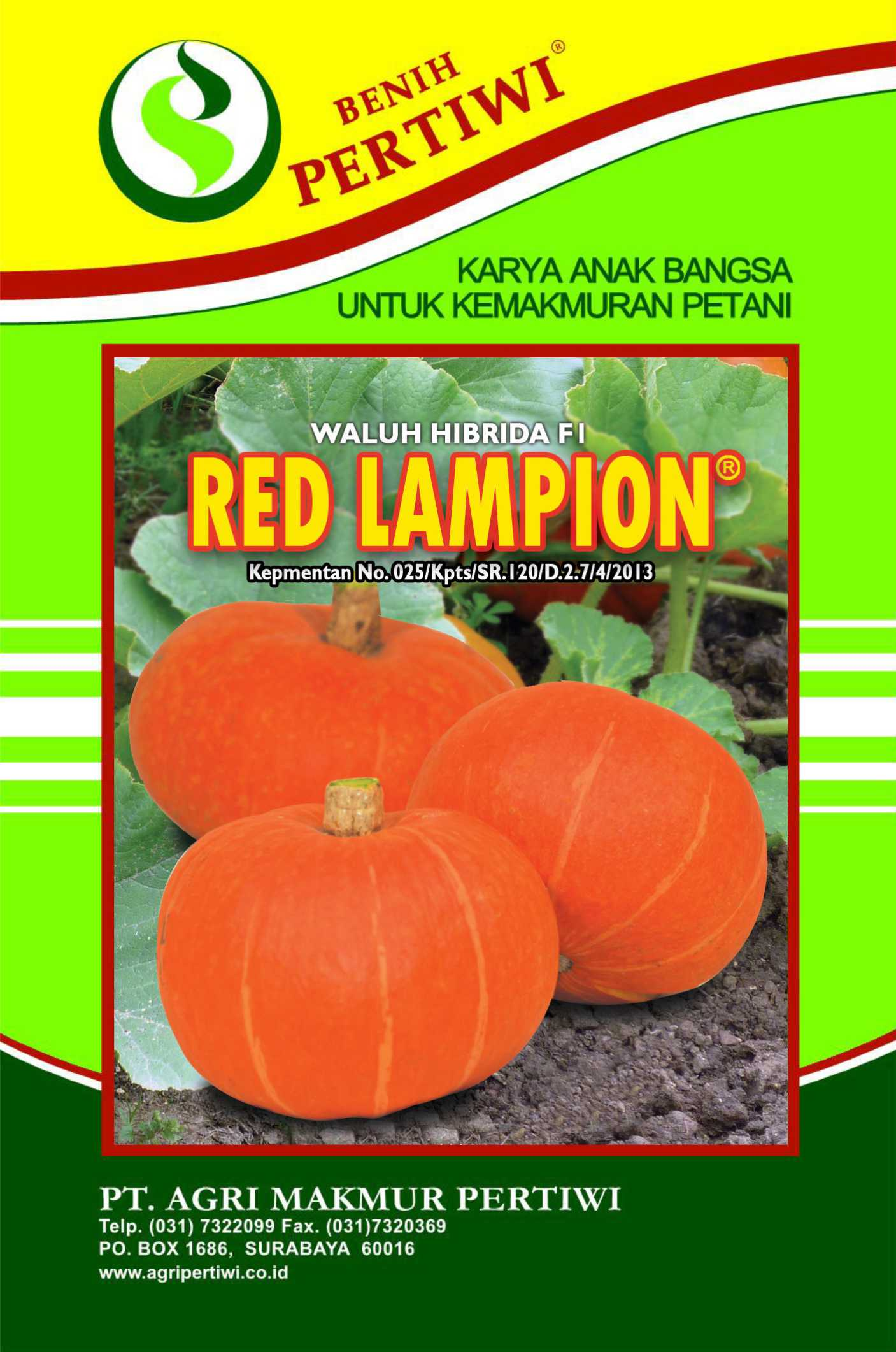 Waluh Red Lampion
