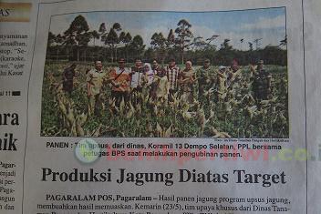 Produksi Jagung Diatas Target