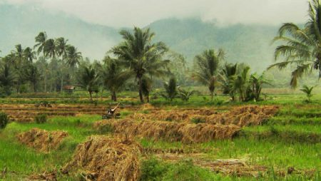 Organisme yang Berperan dalam Pembentukan Pupuk Organik di Tanah