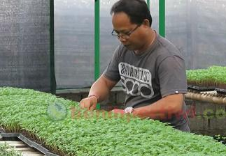 Kisah Sukses Pembibit Bunga Marygold