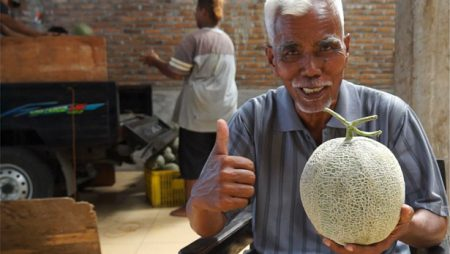 Mbah Melon Sukses Tanam Melon Nobel