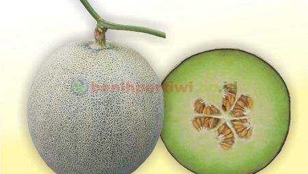 Menentukan Waktu Panen Melon