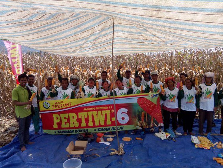 Jagung Hibrida Pertiwi-6 Mulai Dikenalkan di Aceh