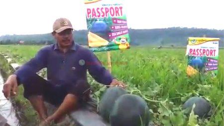 Kalau Bukan Semangka Passport, Pasar Tidak Mau