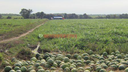 Sewa Lahan, Solusi Bertani Meski Tak Punya Lahan