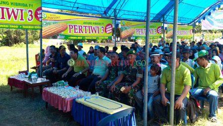 Launching Produk & Panen Raya Jagung Manis Paragon & Exotic