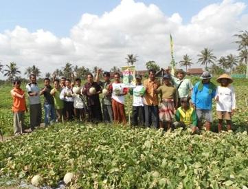 Melon Ivory Disukai Petani – Pedagang Jawa Tengah