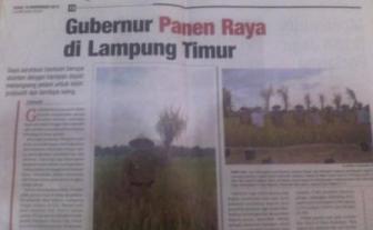 Gubernur Panen Raya di Lampung Timur