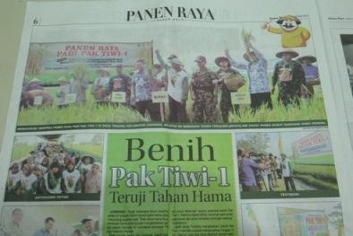 Benih Pak Tiwi-1 Teruji Tahan Hama