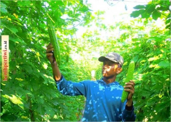 Sukses Bertani Sayur di Usia Muda