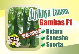 Budidaya Gambas Pertiwi