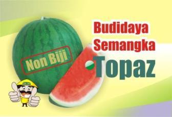 Budidaya Semangka Non Biji Pertiwi