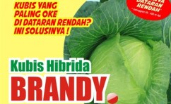 Kubis Brandy