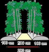 Model Para-para