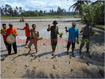 Serunya Tanam Padi Pak Tiwi-1 di Padang
